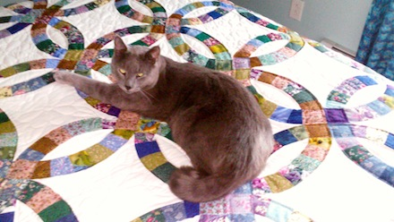 Amish Quilt with Cat